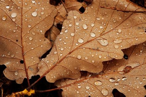fall drop nature leaf detail autumn brown drops photo