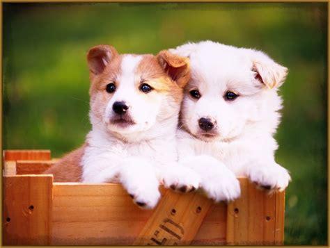 imagenes de animales bonitos image gallery perritos bonitos