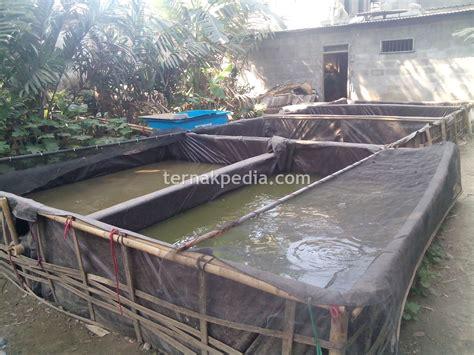 Jual Kolam Terpal Ukuran Besar mengenal kelebihan dan kekurangan kolam ikan lele dari