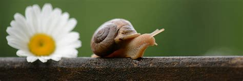 Snail L by Snail Cover Background Twitrcovers