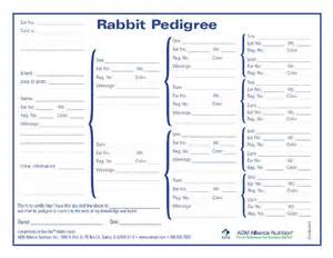 rabbit pedigree blank chart 4h stuff pinterest the o