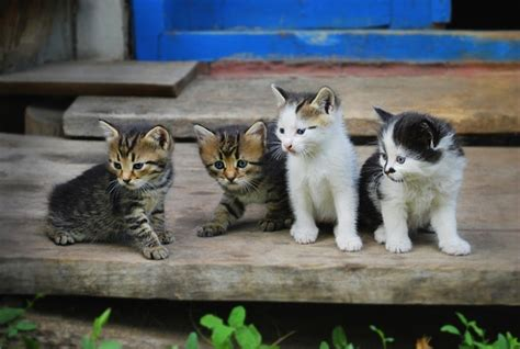 theme names for litter of kittens help us give these 6 litters of kittens hysterical group