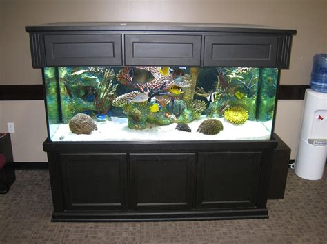 300 gallon aquarium in a office grand forks n d