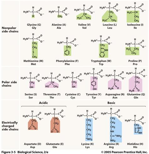 amino acid structure search nbde part i