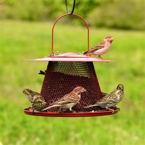 no no 174 red cardinal wild bird feeder birdfeeders com