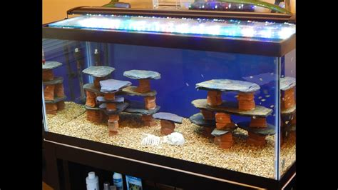 aquarium design using slate diy how to make a rock slate structure for a fish tank