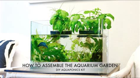 aquarium garden diy aquaponics kit youtube