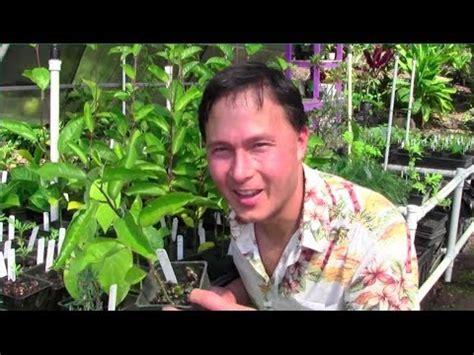 Tropical Perennial Vegetable Gardening In Hawaii Youtube Vegetable Gardening In Hawaii