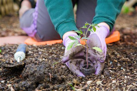 Garten Pflanzen Februar by Bildquelle 169 Alexey Stiop