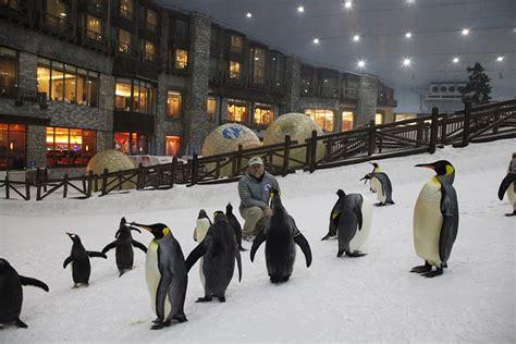 vidéo de skizi dubai la ciudad hecha en oro ski dubai mall