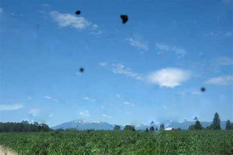 vedere mosche volanti sintomi