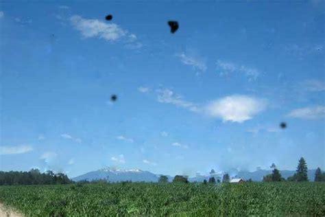 mosche volanti cure sintomi