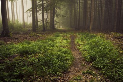 forest floor in fog a day in the eifel jerdess
