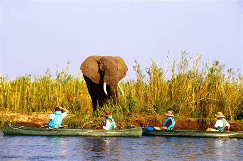 Best National Parks by Lower Zambezi National Park