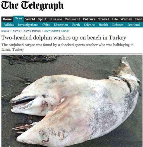 persone con due teste il delfino con due teste il gazzettino it