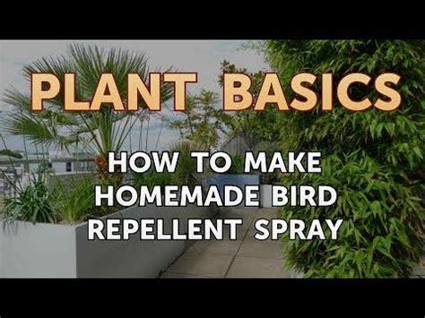 homemade bird repellent spray youtube