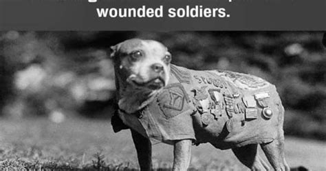Sergeant Stubby Documentary 90 From Tyranny The Story Of Sergeant Stubby The Of Wwi
