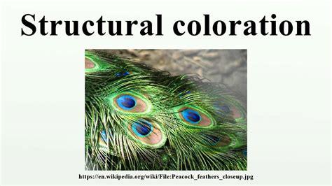 structural coloration structural coloration