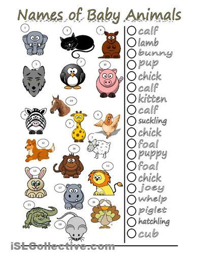 new year animal names the world s catalog of ideas