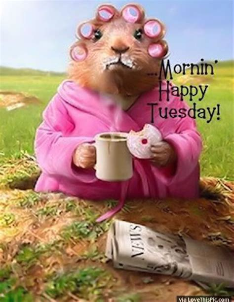 happy tuesday pictures ideas  pinterest
