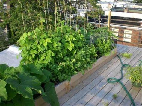 come fare l orto sul terrazzo orto sul balcone kit orto in terrazzo kit essenziale