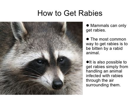 can a vaccinated get rabies rabies