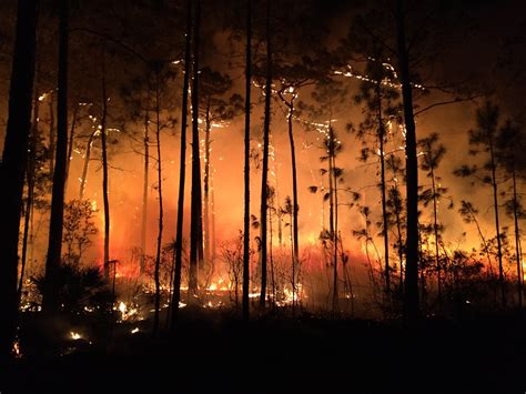 florida wildfires 2 100 wildfires have burned in florida since start of year