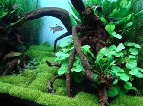 aquascape sebuah hutan  aquarium aquaspace salatiga
