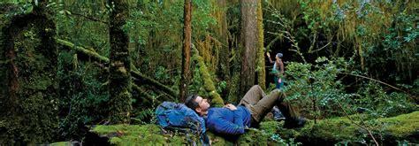 nature and wildlife discover tasmania