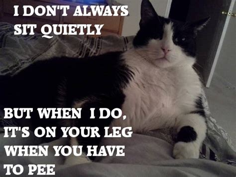 pictures with captions 30 of the funniest cat pics of all time