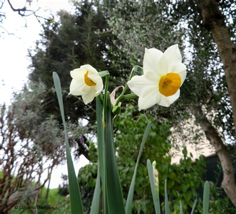 fiori con la lettera a fiori famiglie iniziano con la lettera a b c d