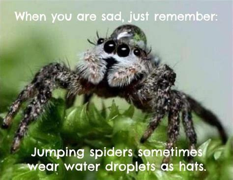 Sad Spider Meme - is this the most adorable spider ever lolzz pinterest