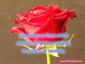 imagenes de rosas solas im 225 genes de rosas rojas