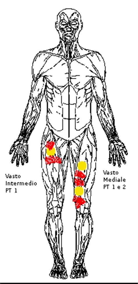 dolore sotto il ginocchio parte interna il quadricipite retto femorale vasto mediale vasto