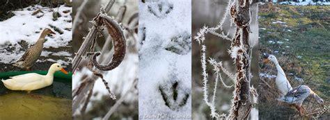 Garten Im Januar by Januar Impressionen Ein Neues Wirein Neues Wir