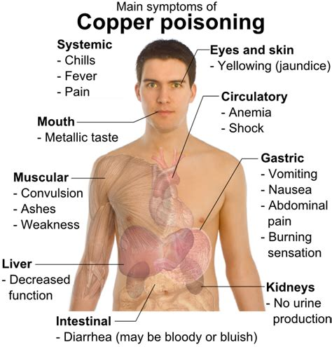 poisoning symptoms copper poisoning causes symptoms treatment copper poisoning