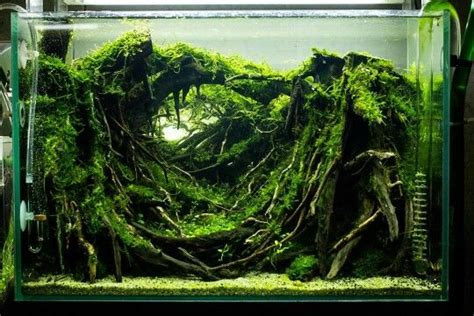 Timer Lu Aquarium 37 best paludarium aquarium terrarium images on aquarium ideas fish aquariums and