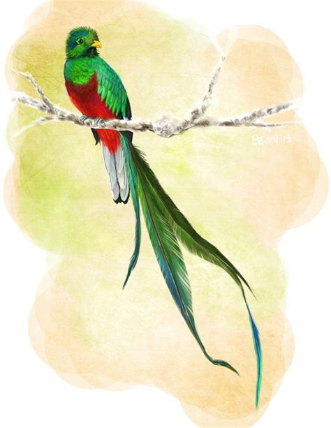 watercolor quetzal tattoo quetzal vector search graphic design