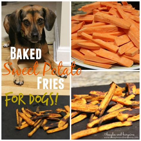 dogs and sweet potatoes sweet potato fries for dogs