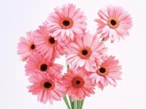 рисунки цветов с днем рождения карандашом