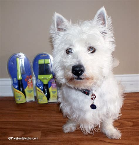 Westie Shed do westies shed
