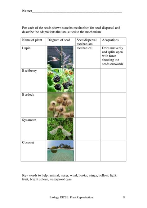 plant reproduction worksheet plant reproduction worksheet