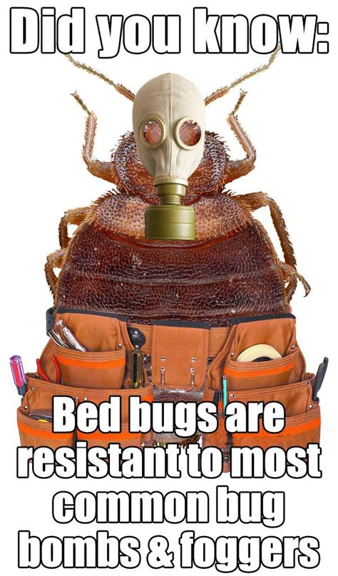 do foggers kill bed bugs bed bugs spray bed bugs spray bombs for bugs