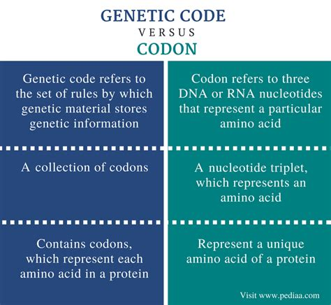 difference between template and coding strand difference between genetic code and codon definition