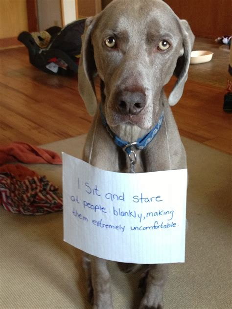puppy shaming shaming collection joke pictures