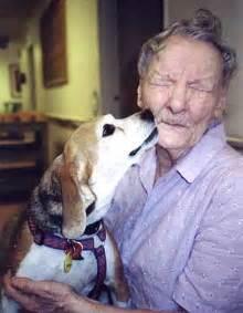 beagles amp buddies pet adoption beagle shelter dog rescue