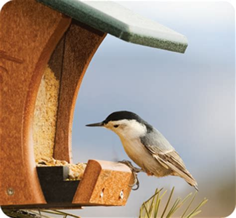 home wild birds unlimited