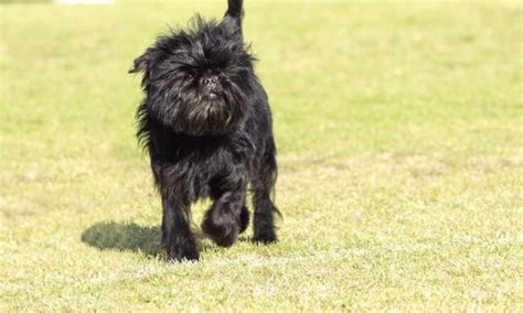 my puppy is limping 4 possible reasons your is limping smart tips