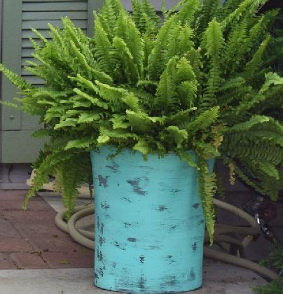 Inexpensive Large Planters by Best 25 Large Planters Ideas Only On Large