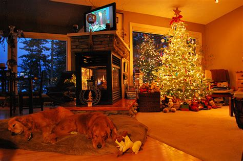 dog house christmas tree christmas christmas tree cozy dogs gorgeous home image 100181 on favim com